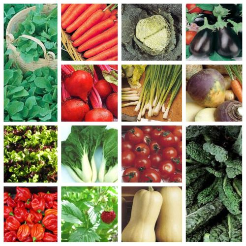 15 packs of vegetable seeds - Swede, carrot, pepper, squash etc