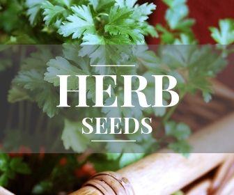 <!-- 002 -->Herb seeds