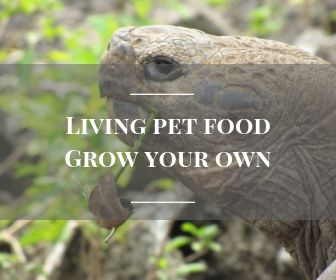 Living pet food