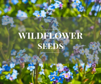 Individual wildflower species