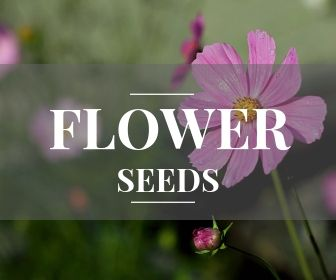 <!-- 003 -->Flower, Shrub and Tree seeds