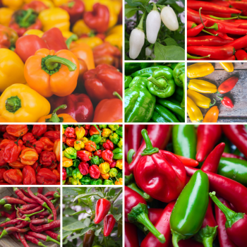 10 Packs Chilli pepper and sweet pepper seed collection - Grow your own!