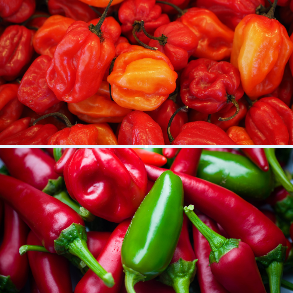 2 packs Chilli pepper seeds - Scotch Bonnet and Jalapeno Seeds