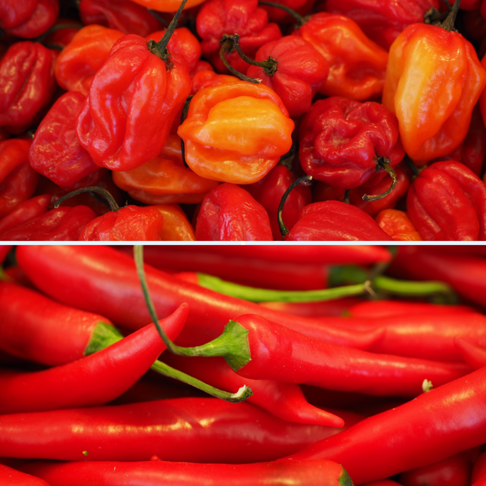 2 Pack Chilli Pepper seeds - Scotch Bonnet and Red Cayenne Seeds