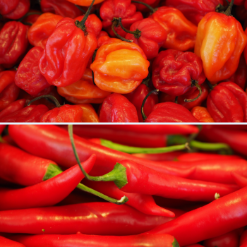 2 Packs Chilli Pepper seeds - Scotch Bonnet and Red Cayenne Seeds