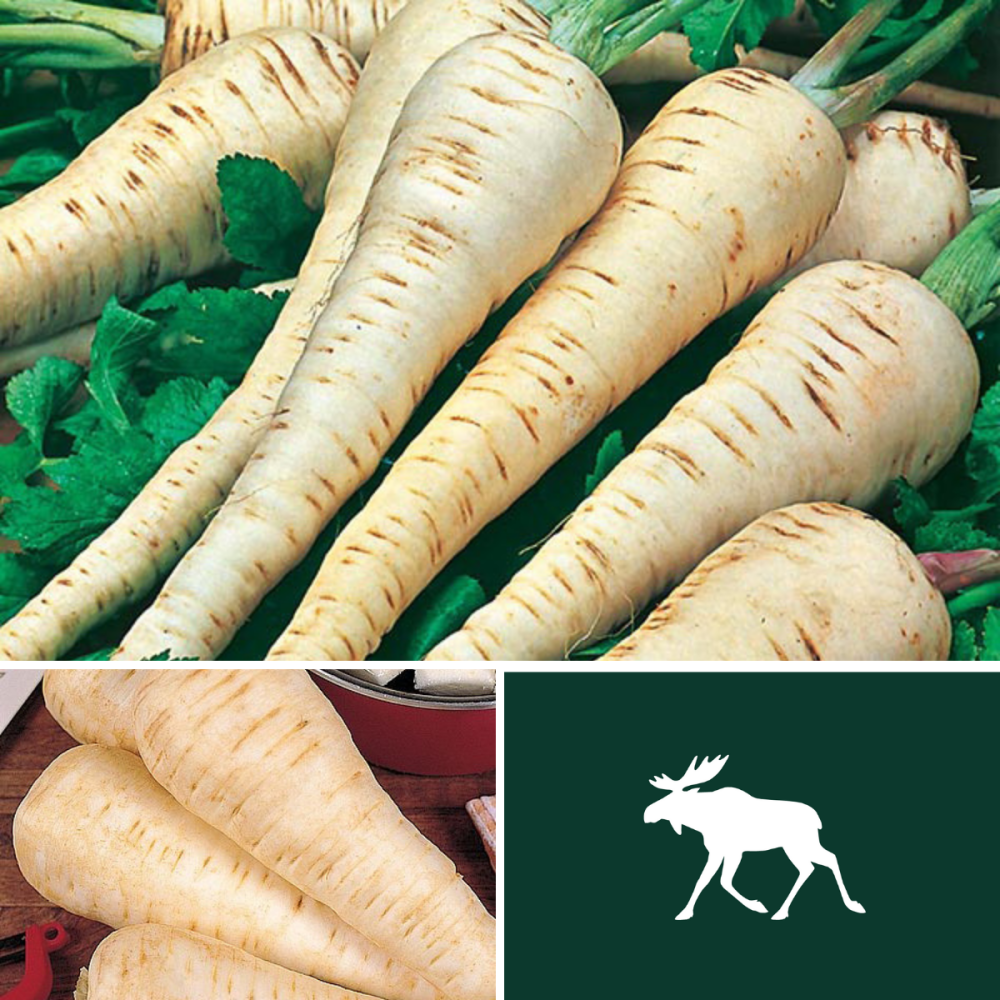 2 pack Parsnip seeds Tender & True and White Gem
