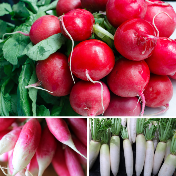 3 packs Radish seeds - French Breakfast, White Icicle and Cherry Belle