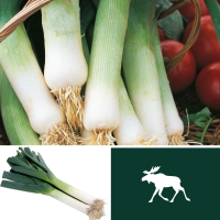 2 packs Leek Seeds - Lyon 2 Prizetaker and Musselburgh