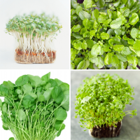 4 packs Cress seeds - Curled, Common, Land, watercress