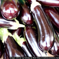 Aubergine Long purple seeds