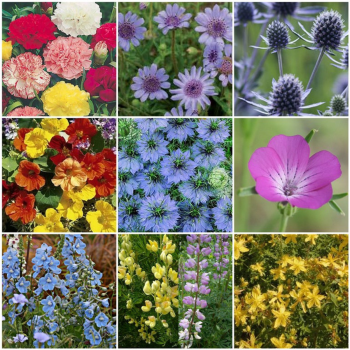 10 Packs Flower Seeds inc Nasturtium, Nigella, Delphinium etc
