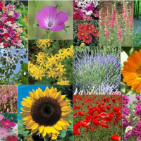 15 Packs of Flower Seeds inc cosmos, stocks, marigold and more