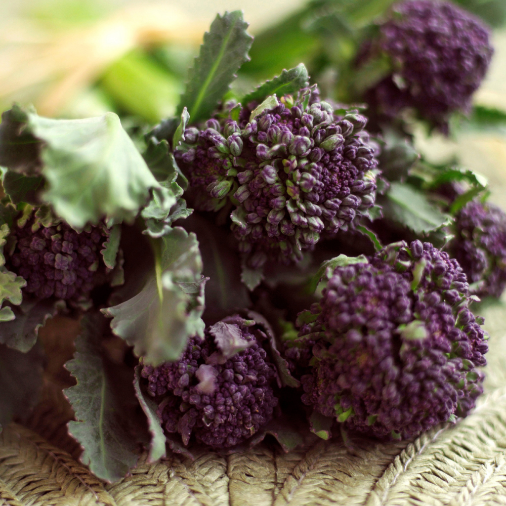 Broccoli - Early Purple sprouting - 400 Seeds
