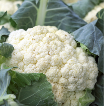 Cauliflower - All year round Seeds