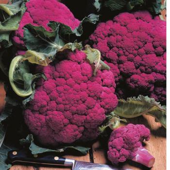 Cauliflower - F1 Graffiti seeds