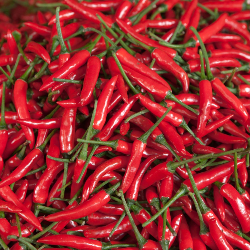 Chilli Pepper Ring O Fire - HOT! seeds - Grow your own hot chillies
