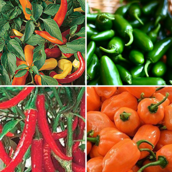 Chilli seeds collection Jalapeno, Hungarian, Habanero, Ring o fire chilli peppers