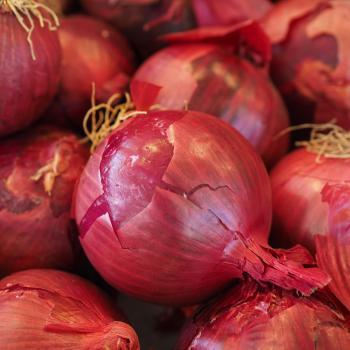 Onion Kamen Seeds