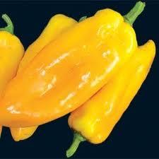 Sweet Pepper Marconi Yellow seeds