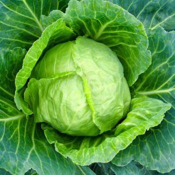 Cabbage Brunswick seeds