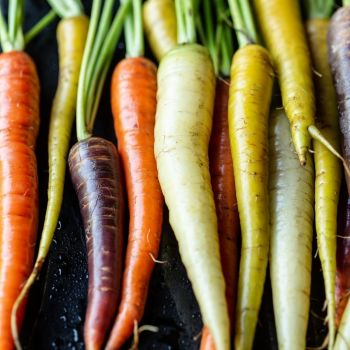 Carrot Mixed seeds - grow a rainbow!