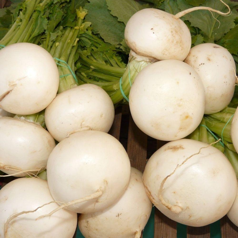 Turnip - snowball seeds