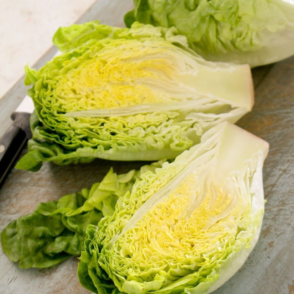 Lettuce Vailan seeds