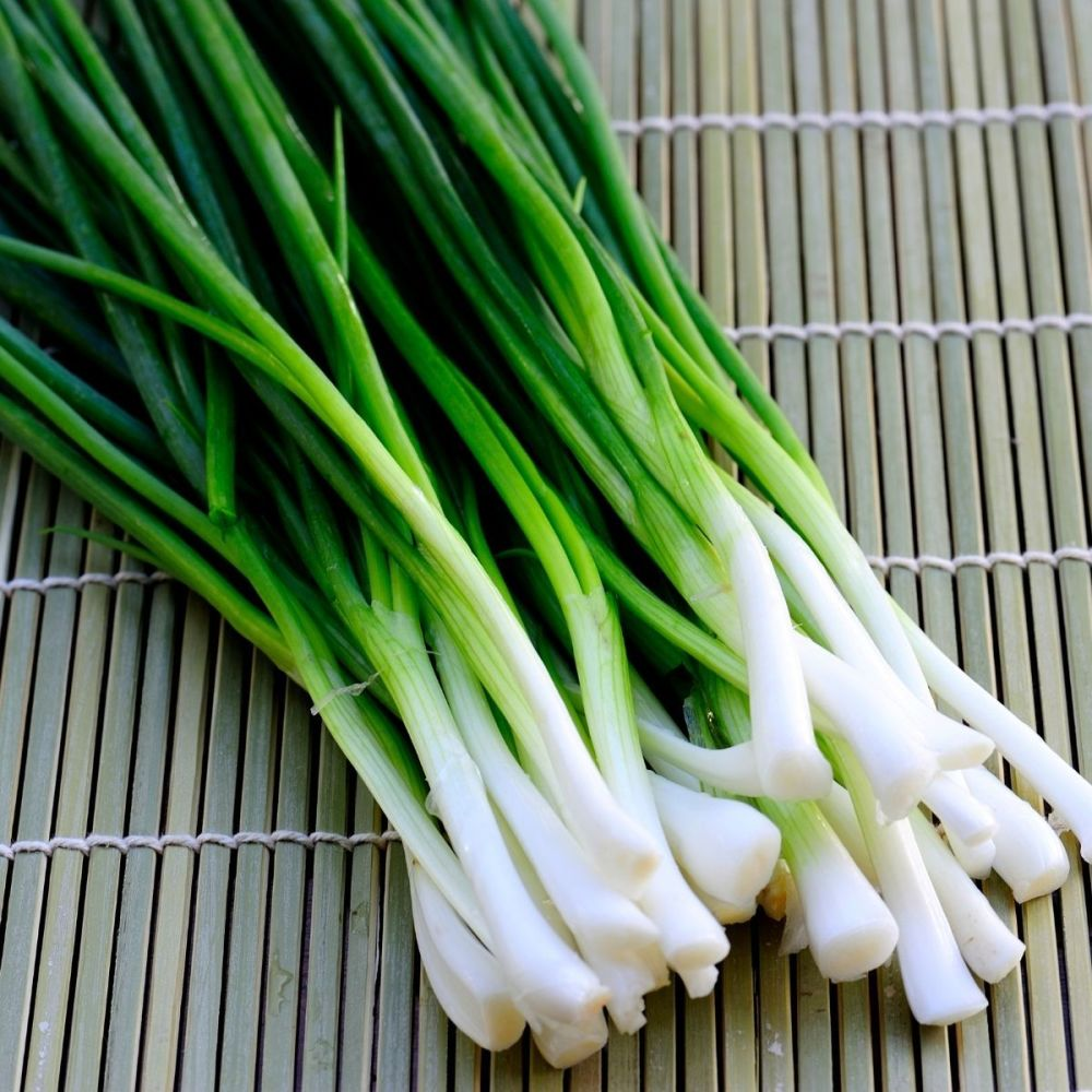 Spring Onion Ishikura seeds
