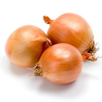 Onion Senshyu Yellow Seeds