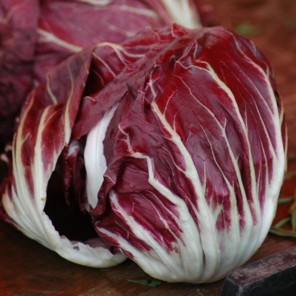 Radicchio Palla Rossa Chicory Seeds