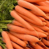 Carrot Karotela seeds