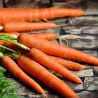 Carrot Autumn King 2 seeds