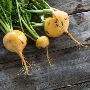 Turnip Goldana seeds