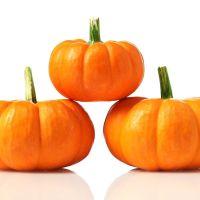 Pumpkin F1 Jill Be Little Seeds