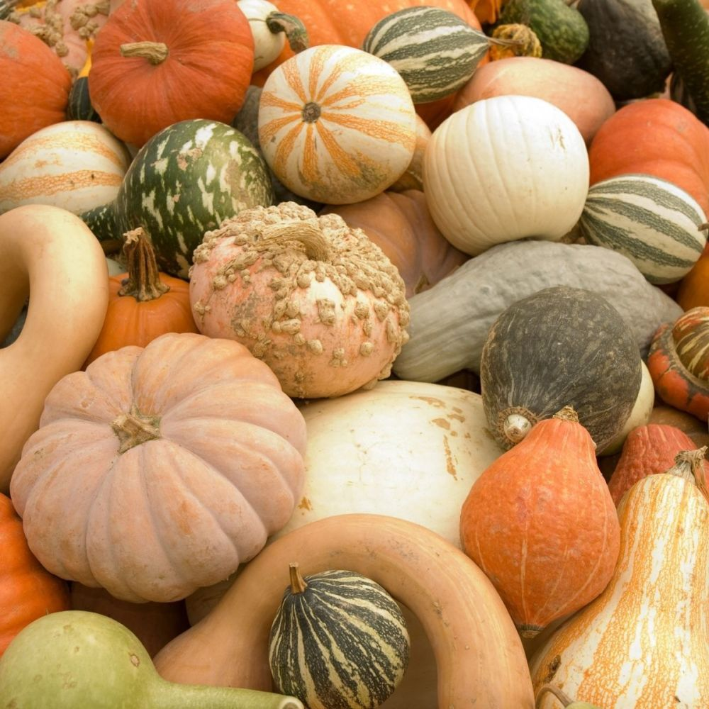 Gourd Small Fruited Formula Mixed seeds