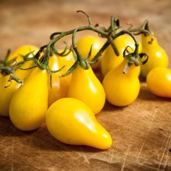 Tomato Yellow Pearshaped seeds