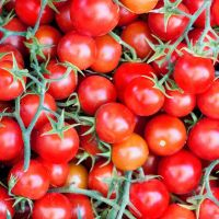 Tomato Cherry Gardener's Delight  Seeds