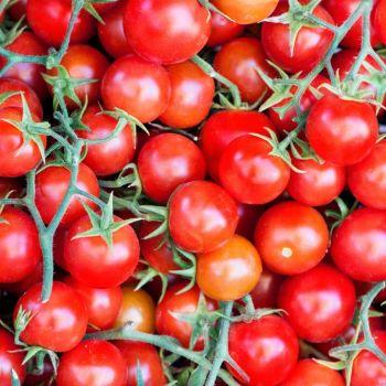 Tomato Cherry Gardener's Delight  Seeds