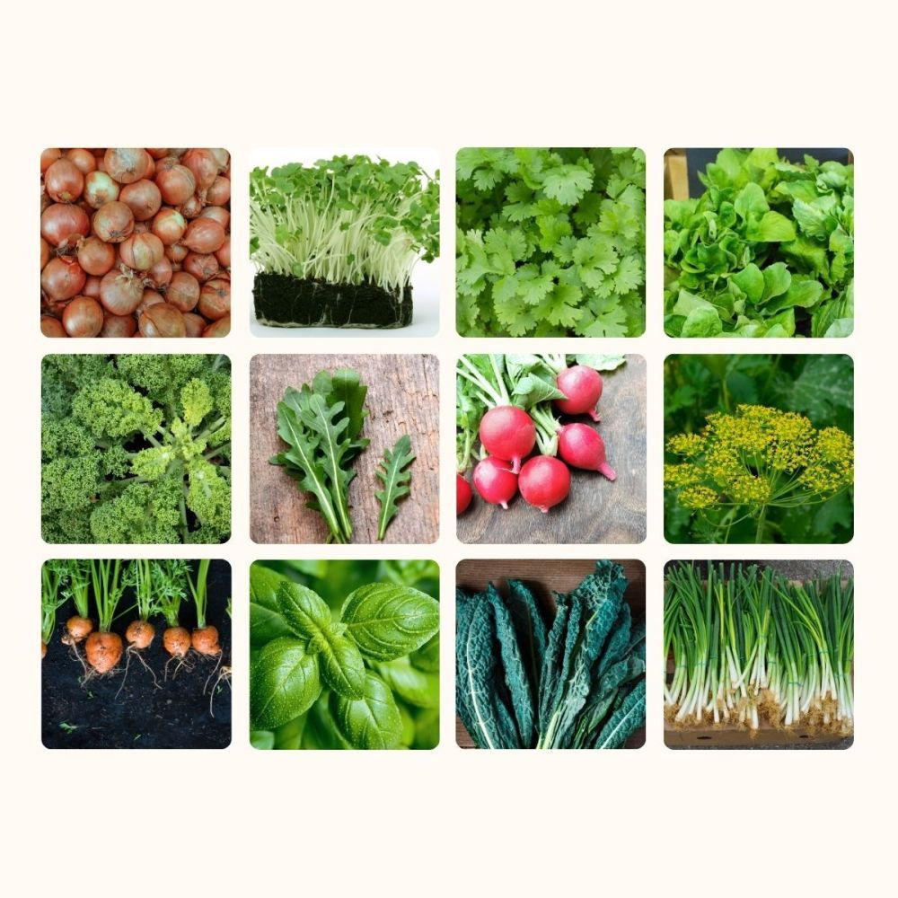 12 Packs Veg and herb seeds - inc onion, radish, carrot, coriander, basil etc
