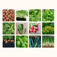 12 Packs Veg and herb seeds - inc onion, radish, carrot, coriander, basil etc