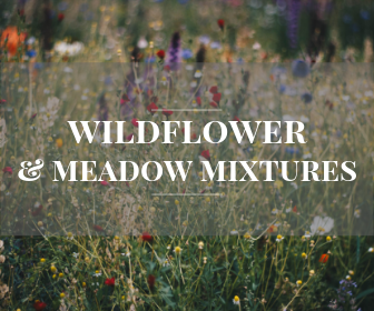 Wildflower and meadow mixtures