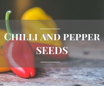 Chilli and sweet pepper seeds