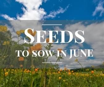 <!-- 006 -->Seeds to sow June