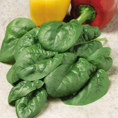 Spinach - Bloomsdale - 250 seeds