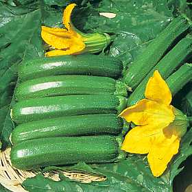 Courgette Long Green Trailing seeds
