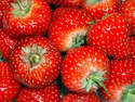 Strawberry - Temptation - seeds