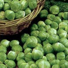 Brussel sprouts Long island improved - 500 seeds