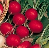 Radish Cherry Belle Seeds