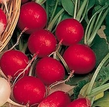 RADISH - CHERRY BELLE - garden vegetable 500 SEEDS