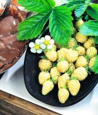 STRAWBERRY - 'RARE' YELLOW WONDER - GARDEN FRUIT SEEDS